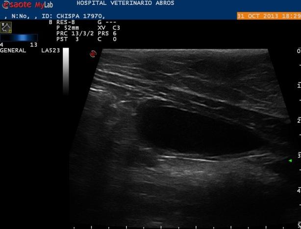Corte longitudinal de vejiga al mes postcirugía