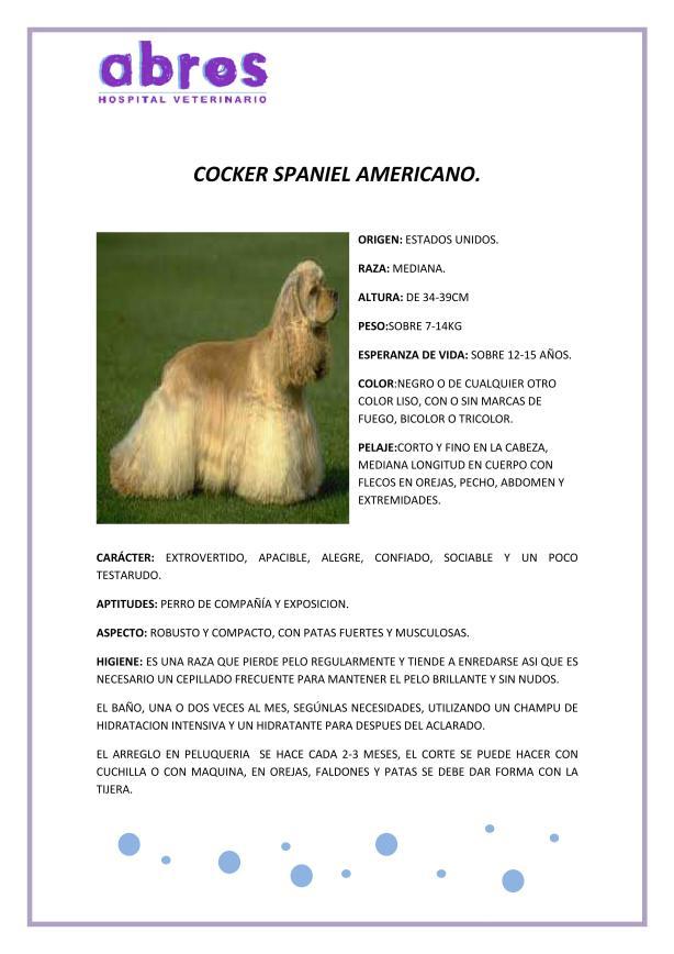 COCKER AMERICANO
