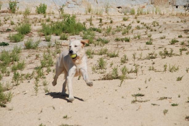 Phoebe disfrutando de su paseo