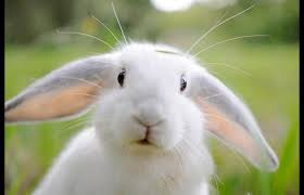 conejo 4